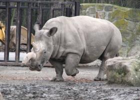 10 животных, вымерших за